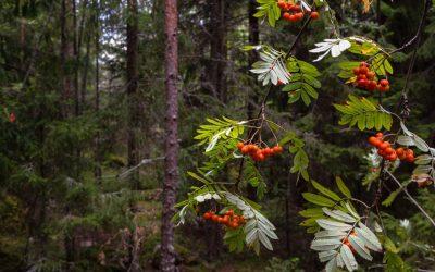 Östra Nylands skärgårdsprogram 2012